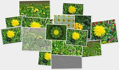 , Album foto,flori de păpădie, startachim blog
