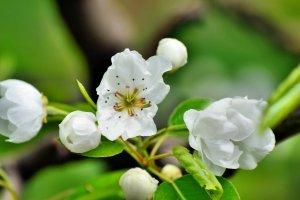 flori,flower,spring