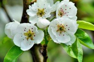 primăvara,flori