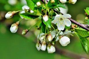 spring,flowers