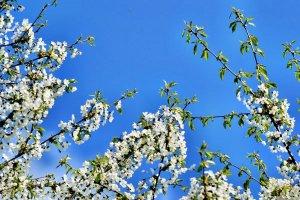 senin,primăvara