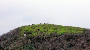 primăvara,pădure,forest