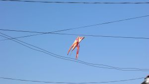 kite hanging in wires
