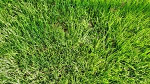 green grass in October