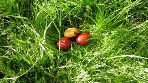 oua in iarba
