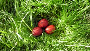 trei oua rosii