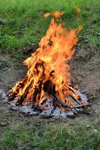 foc 1