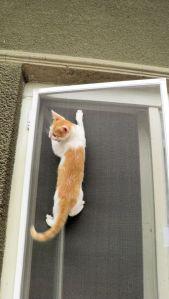 pisica pe plasă