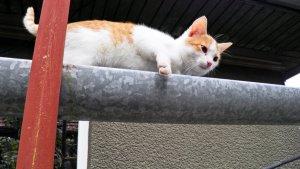 pisica pe citerna