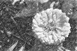 DSC_0050a2-Snap Art