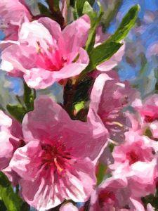 flori de piersic-pictura