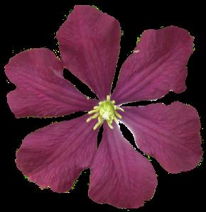 flower171