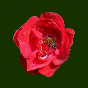 la-cules-de-polen-denoise