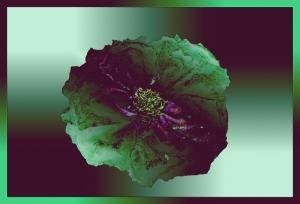trandafir-uscat-inramat-gradient