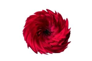 trandafirul-rosu-rotit