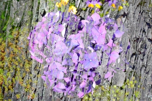 flori pe scoarta de copac