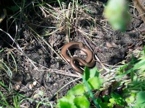 snake in the garden 1