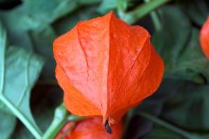 floare faină (3)