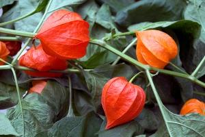 floare faină (4)
