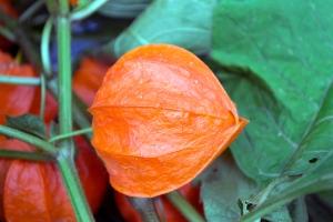 floare faină (5)