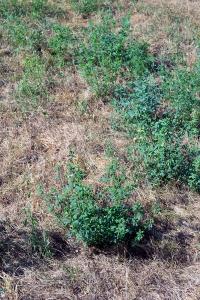 lucerna si iarba uscata (1)