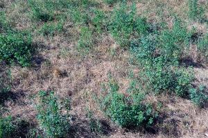 lucerna si iarba uscata (3)