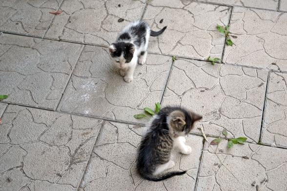 pisici 1